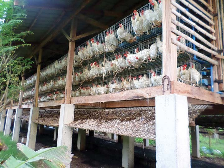 Starting a Poultry Farm for Beginners – A Sample Business Plan