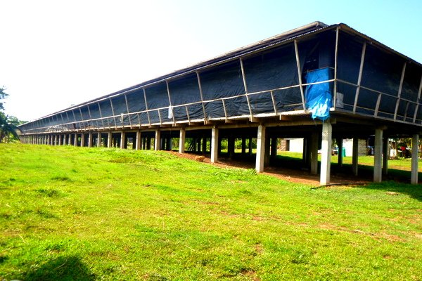 Poultry Farm Construction : Qualities of a good housing design in the philippines
