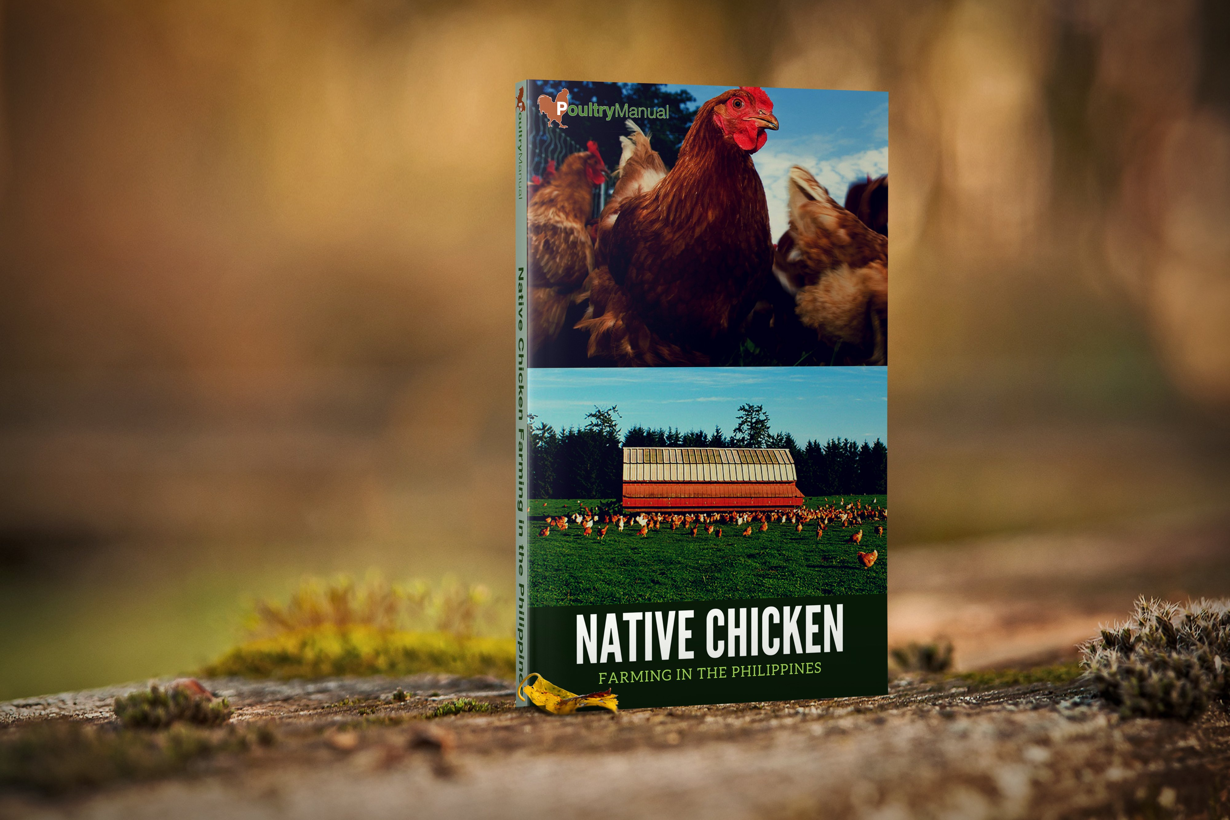 The Complete Guide to Free Range Chicken Farming in the