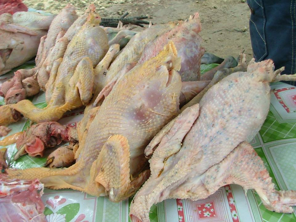 Slaughtered Darag Native Chickens