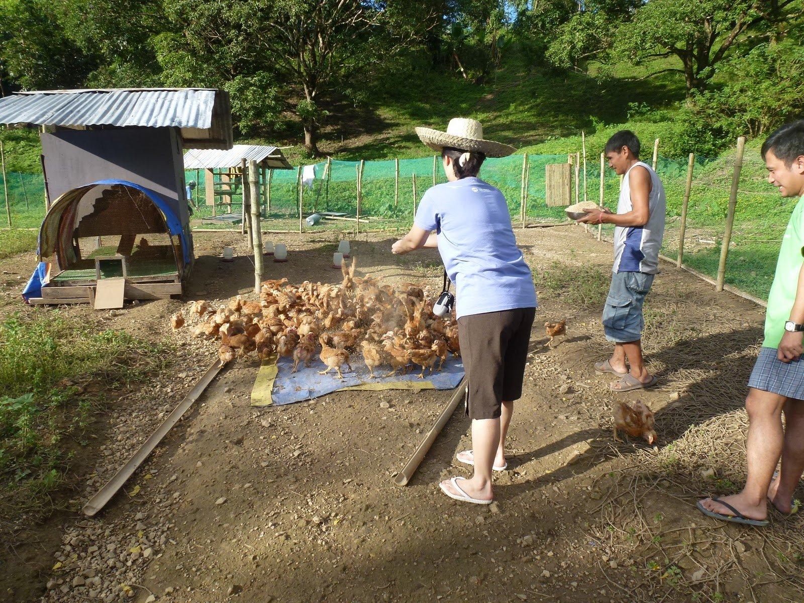 Native poultry farming is a lucrative venture with ofws