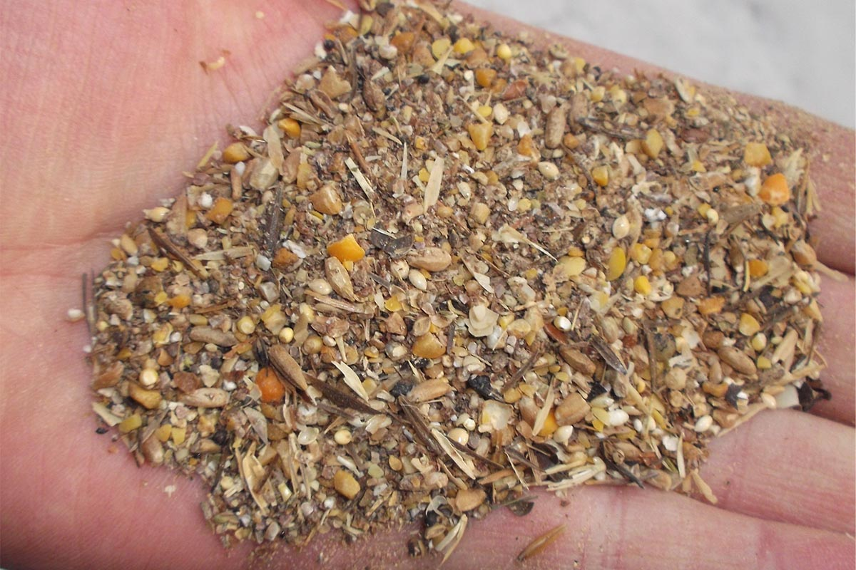 Poultry Feed Formulation: The Basics You Need to Know